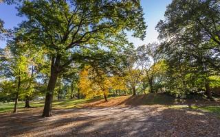 Парк «Орлёнок» планируют открыть в первый день осени