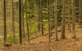 Воронежский природный парк Северный лес будет благоустроен