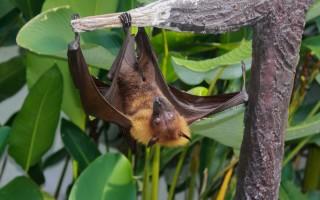 В воронежском зоопарке пройдёт «Ночь летучих мышей»