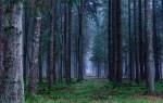 Вокруг Воронежа создадут зелёный пояс