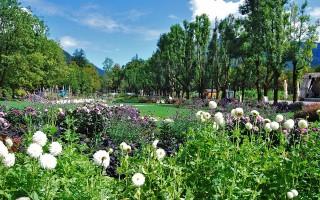 Выставка-ярмарка «Воронеж – город-сад» пройдёт в сентябре
