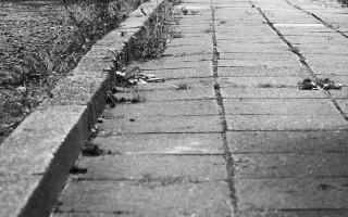 В Воронеже больше не будут белить деревья и красить бордюры в черный цвет