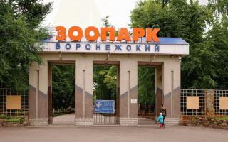 Зоопарк в Воронеже: 25 лет на радость людям