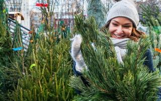 Где купить новогоднюю елку в Воронеже