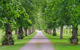 Где в Воронеже посадили новые деревья