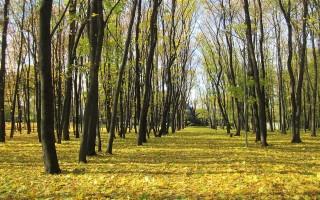 Ученые МГУ назвали Воронеж одним из самых зелёных городов РФ