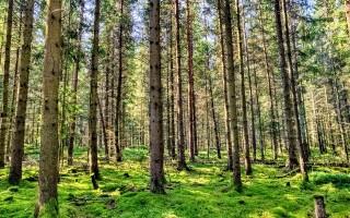 В Воронеже планируют создать парк областного значения