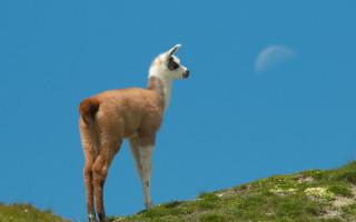В воронежском зоопитомнике у нутрии и ламы родились детеныши