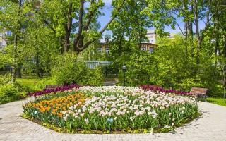 В Воронеже высадят цветы на сумму более 22 миллионов рублей