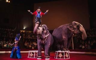 В воронежском цирке выступят слоны