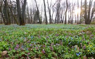 В Воронежском ботсаду высадили «авторские» растения