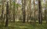 Окрестности Воронежа очистят от аварийных деревьев