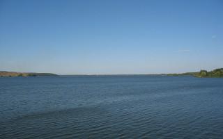 В Воронежское водохранилище запустят белых амуров и толстолобиков
