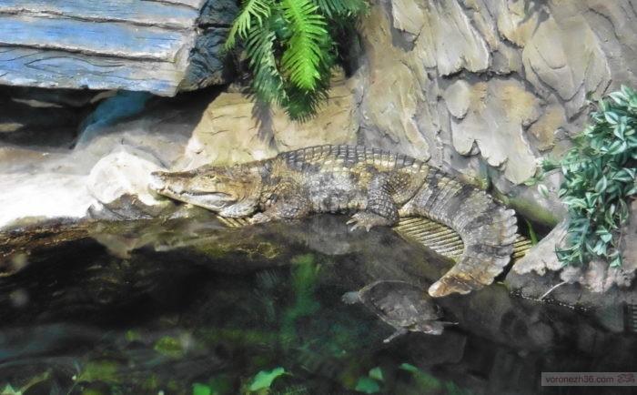 Крокодилы в Воронежском океанариуме