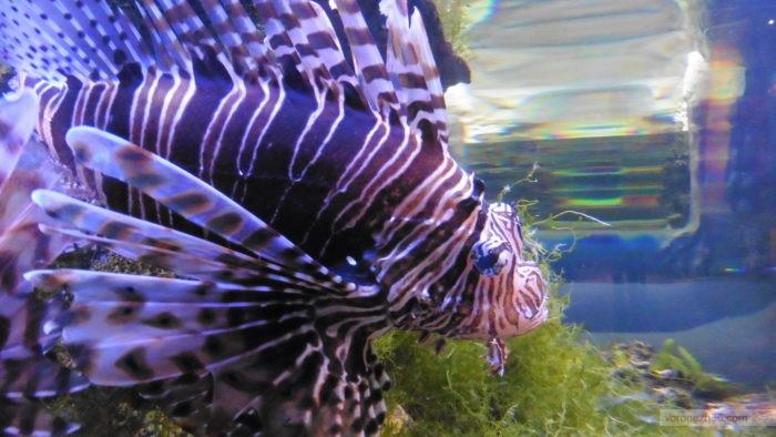 Voronezh Aquarium