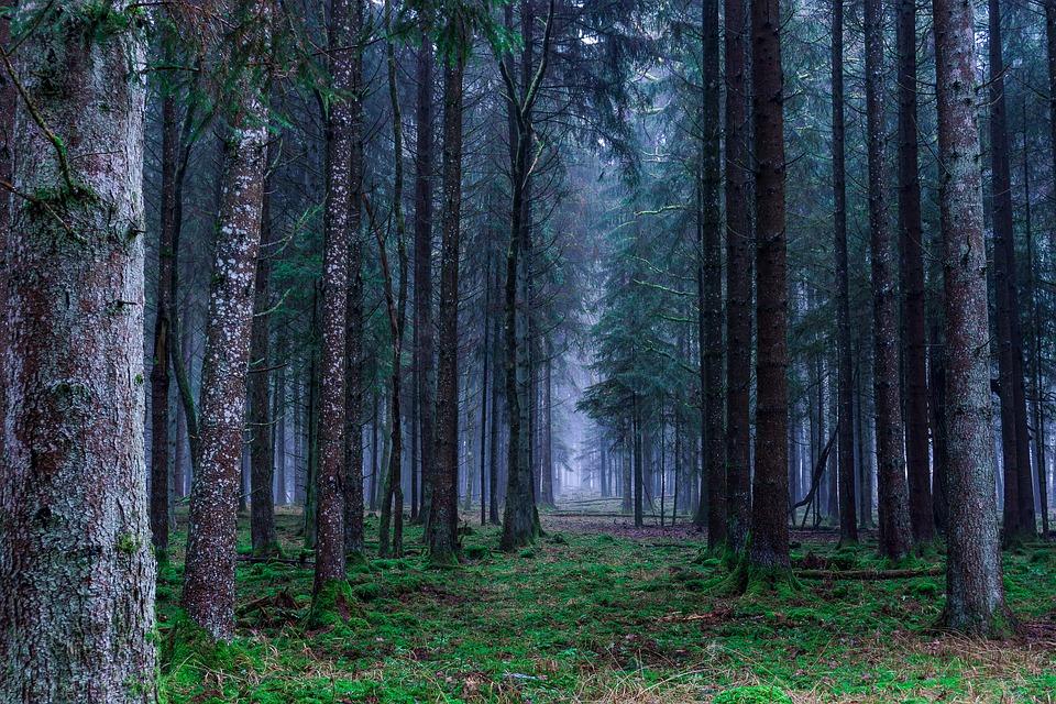 Зеленый пояс