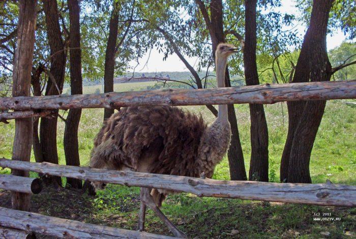 Животные на Кудыкиной Горе