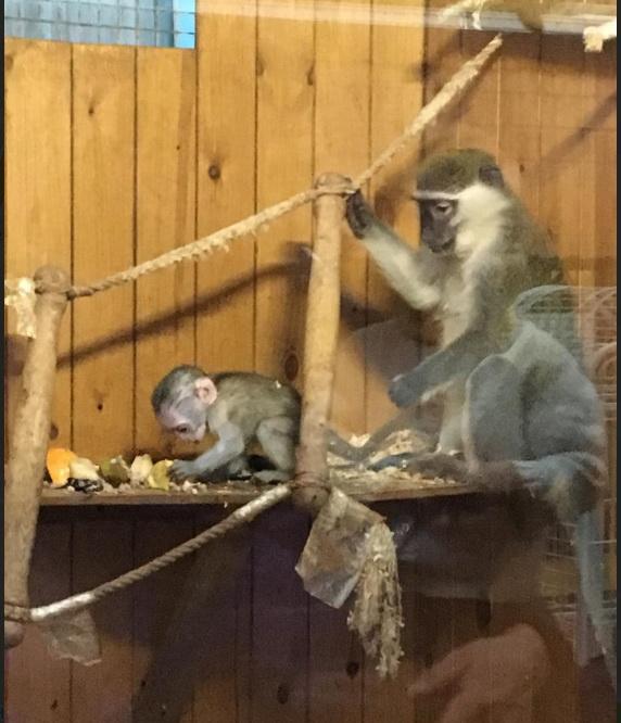 Приматы в Воронежском зоопарке