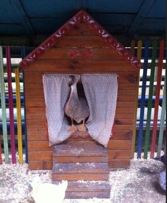 Птицы в Воронежском зоопарке