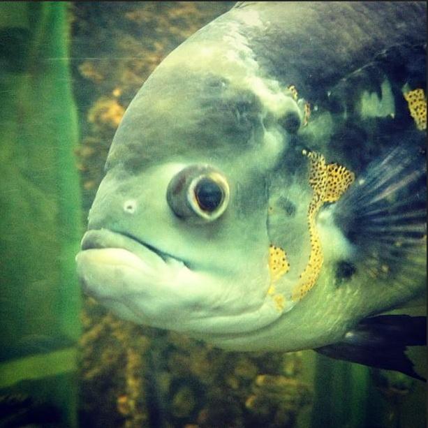 Рыбы в Воронежском зоопарке