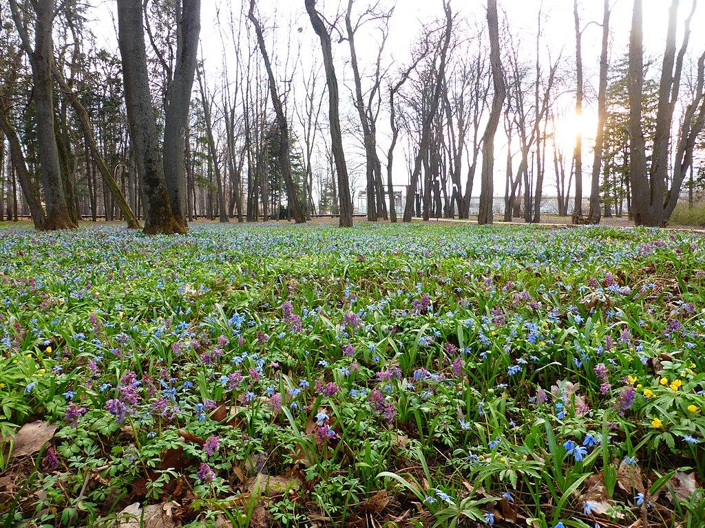 Ботанический сад Воронеж